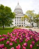 Tulpen durch Kapitol Stockbild