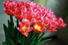 Tulpen in een boeket Royalty-vrije Stock Foto