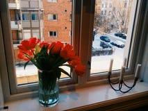 Tulpen in een transparante container royalty-vrije stock afbeelding