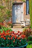 Tulpen in een tuin royalty-vrije stock foto