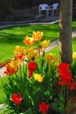 Tulpen an einem Haus Stockfotografie