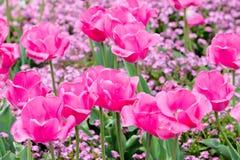 Tulpen in einem Park Lizenzfreie Stockbilder
