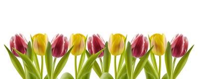 Tulpen in einer Reihe stockbild