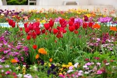 Tulpen en andere kleurrijke bloemen die in de Indische Tuin van Klusjesbagh in Hamilton Gardens bloeien stock fotografie