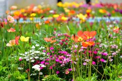Tulpen en andere kleurrijke bloemen die in de Indische Tuin van Klusjesbagh in Hamilton Gardens bloeien royalty-vrije stock foto