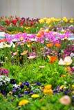 Tulpen en andere kleurrijke bloemen die in de Indische Tuin van Klusjesbagh in Hamilton Gardens bloeien stock foto