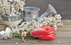 Tulpen en bloeiend takje Stock Fotografie