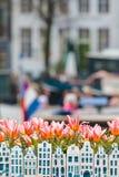 Tulpen en de huizen van het herinneringskanaal voor een kanaal van Amsterdam Royalty-vrije Stock Afbeeldingen