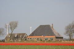 Tulpen en een boerderij Stock Foto