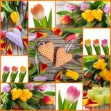 Tulpen en hartencollage Stock Afbeeldingen