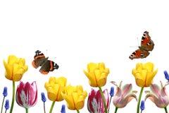Tulpen en vlinders Royalty-vrije Stock Afbeeldingen