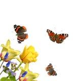 Tulpen en vlinders Royalty-vrije Stock Foto's