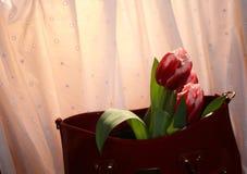 Tulpen en vrouwen` s zak Stock Foto
