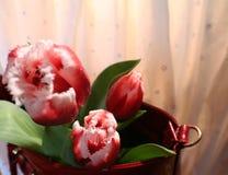 Tulpen en vrouwen` s zak Stock Foto's
