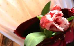 Tulpen en vrouwen` s zak Royalty-vrije Stock Fotografie