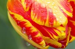 Tulpen en water royalty-vrije stock afbeelding