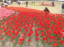 Tulpen-Festival Lizenzfreie Stockbilder