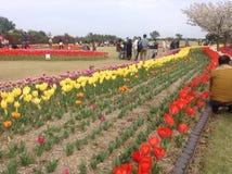 Tulpen-Festival Lizenzfreie Stockfotografie