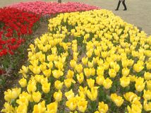 Tulpen-Festival Lizenzfreies Stockfoto