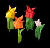 Tulpen getrennt auf schwarzem Hintergrund Lizenzfreies Stockbild