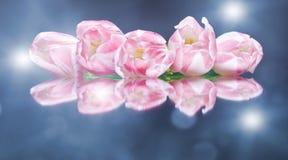 Tulpen glanzende bloemen op de kleurrijke achtergrond royalty-vrije stock afbeeldingen