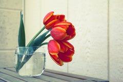 Tulpen in glas Stock Foto's