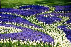 Tulpen in het park Stock Foto
