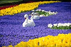 Tulpen in het park Royalty-vrije Stock Foto