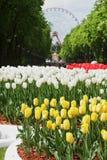 Tulpen in het stadspark van rust Royalty-vrije Stock Foto's