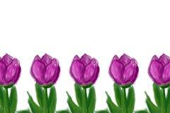 Tulpen het trekken stock afbeeldingen