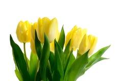 Tulpen II van Pasen Royalty-vrije Stock Afbeeldingen