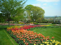 Tulpen im Frühjahr Stockbild