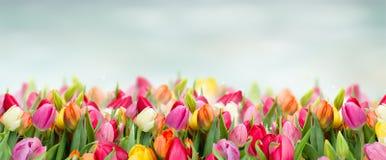 Tulpen im Garten lizenzfreie stockbilder