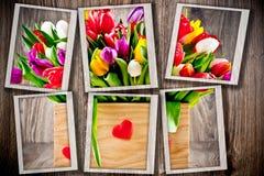 Tulpen im Kasten stockfotos