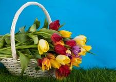 Tulpen im Korb färbt Hintergrund grüne gras Blumen lizenzfreie stockfotos