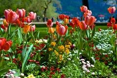 Tulpen im Park Lizenzfreies Stockfoto