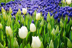 Tulpen im Park stockfotografie