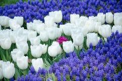 Tulpen im Park lizenzfreie stockfotos
