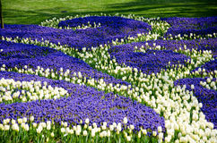 Tulpen im Park Stockfoto
