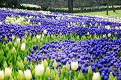 Tulpen im Park Lizenzfreie Stockfotografie