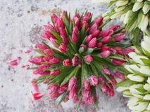 Tulpen im Winter stockbilder