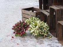 Tulpen im Winter stockfotos