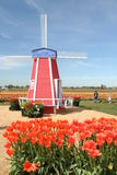 Tulpen jeder Art Stockbild