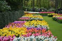 Tulpen in Keukenhof Royalty-vrije Stock Foto