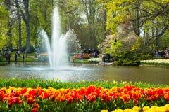 Tulpen in Keukenhof-park Royalty-vrije Stock Foto