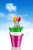 Tulpen in kleurrijke emmers - het knippen weg Stock Afbeeldingen