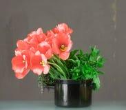 Tulpen in koken-pot Stock Foto