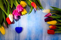 Tulpen mit einem Herzen auf einer blauen Tabelle Stockfotos