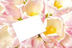 Tulpen mit Karte Stockfotos