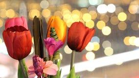 Tulpen nachts Lizenzfreies Stockfoto